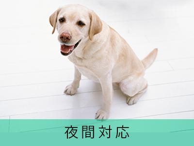 口コミ・評判 5件: ヴァル動物病院 - 兵庫県西宮市【 …